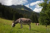 Hiking donkeys