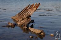 Boat remains