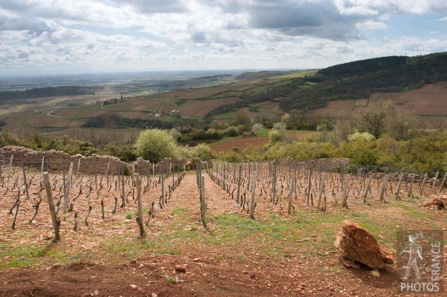 Mâconnais vineyards seen from the Roche de Solutré