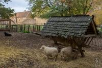 Sheep pen