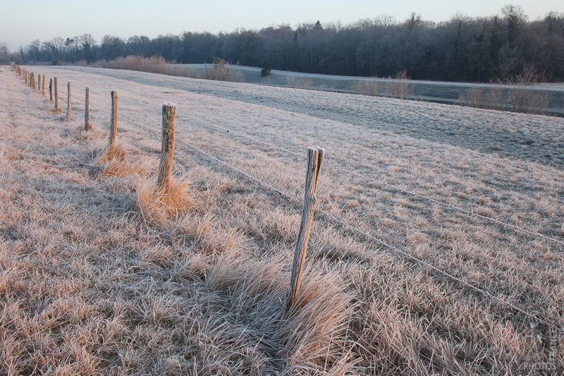 Deep frost on the fence