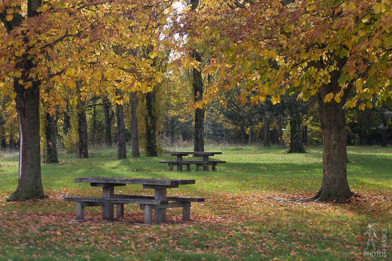 Picnic tables in Fall