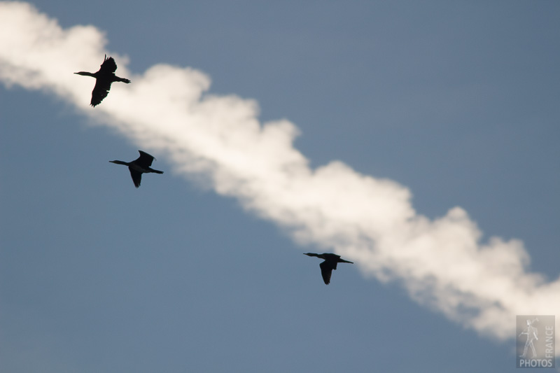 Cormorants and trails of smoke