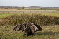 Lone tree stump