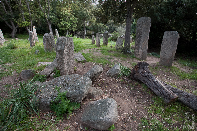 Menhirs in the forest