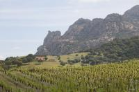 The sartenais vineyards