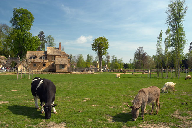 Cattle in the queen's hamlet