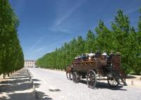 Horse carriage heading for the Grand Trianon