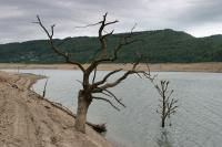 Dead trees near an empty dam lake