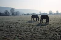 Horses in a vast field