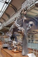 Megatherium in Paris