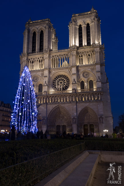 Notre Dame Christmas tree